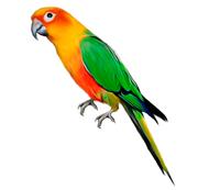 Aves-exóticas